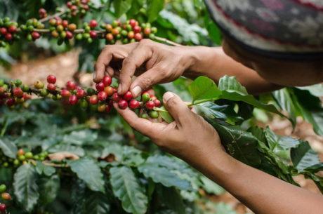 coffee 93db801e ddc0 4915 a7a1